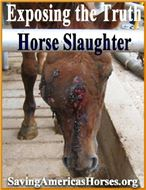Bikers Against The Slaughter Of America's Wild Horses