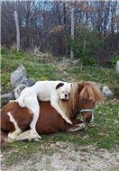 Animal Lovers 2